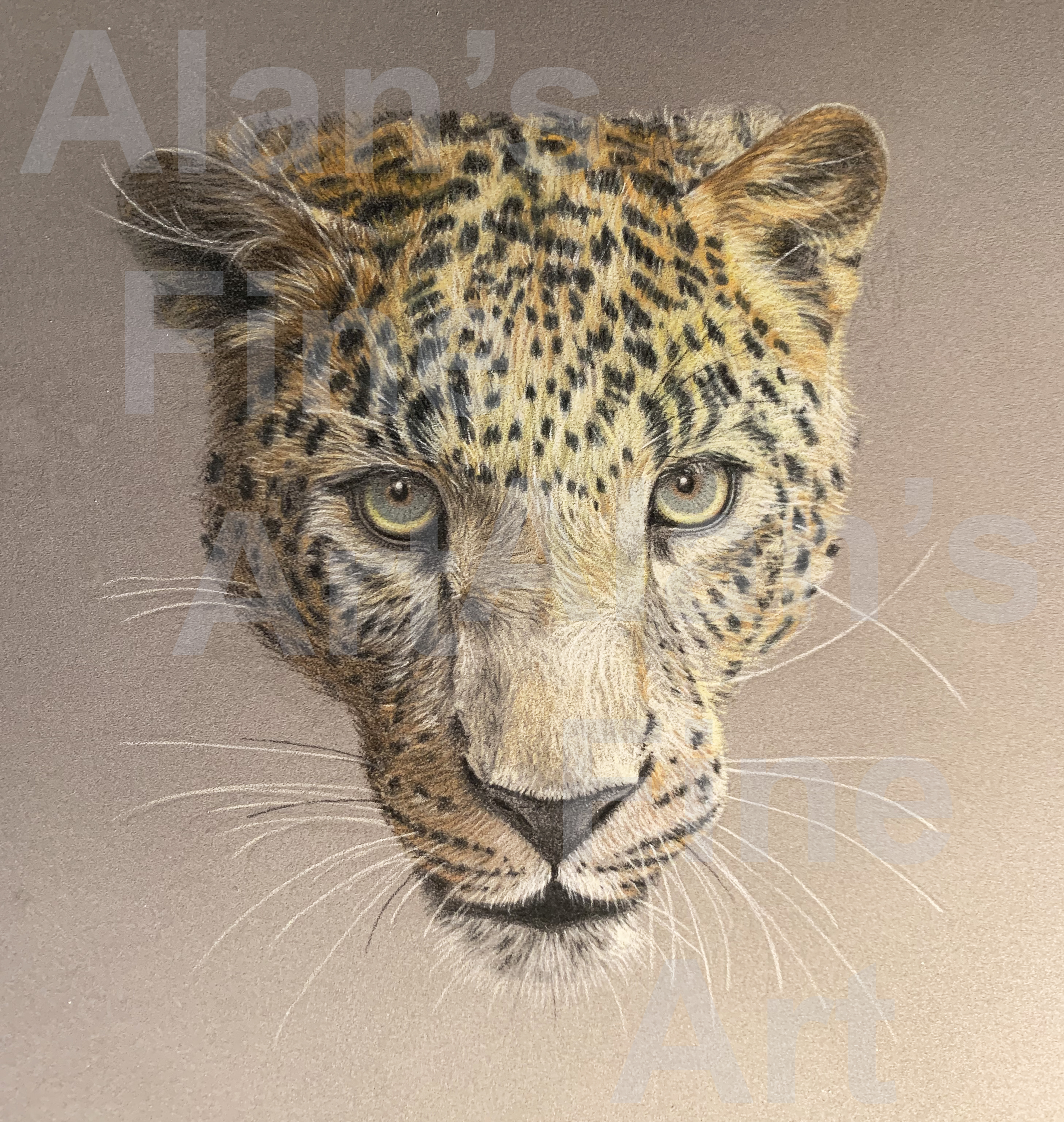 600 leopard iphone image IMG_0399 180 wide with watermark