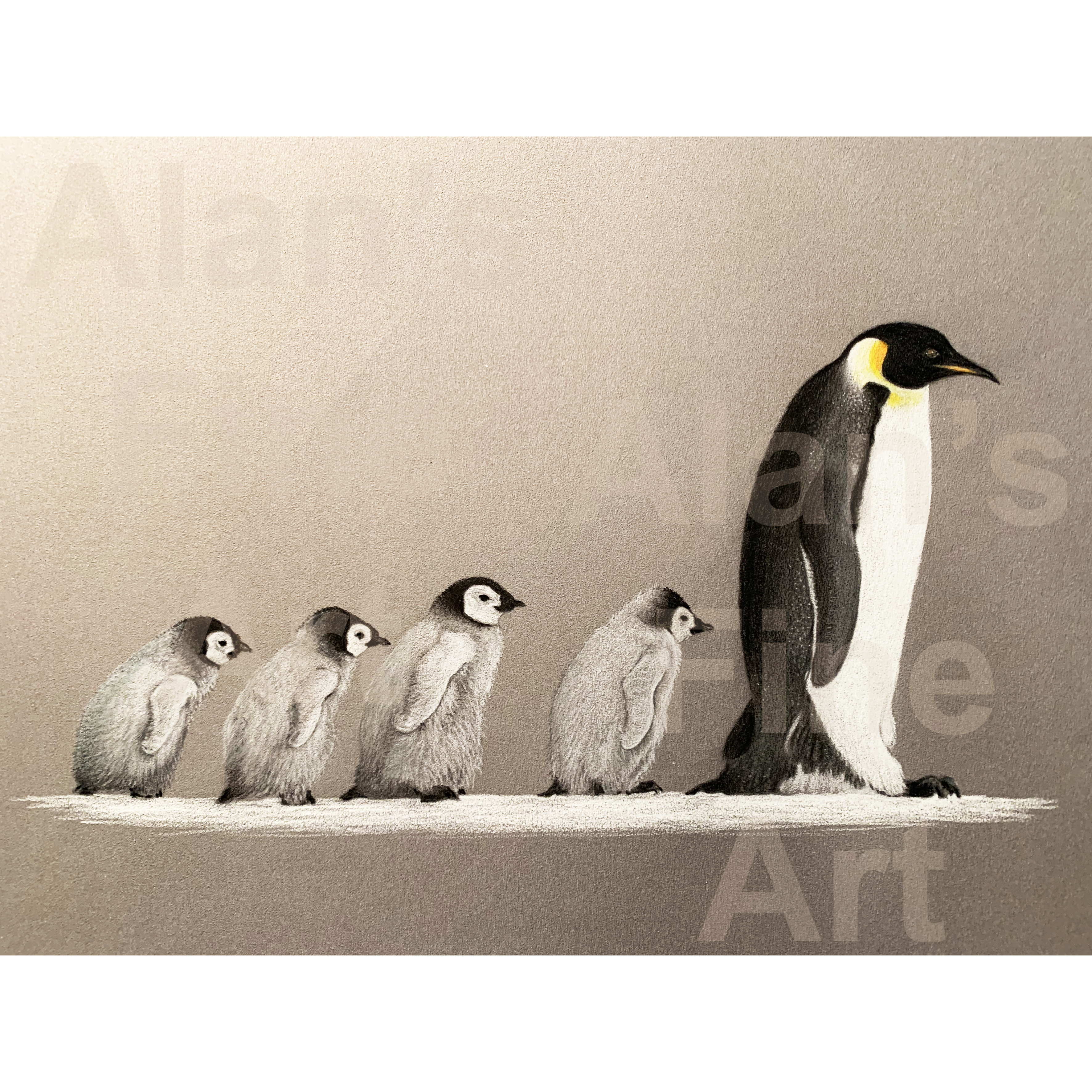 600 penguins iPhone IMG_0602 150mm square with watermarks