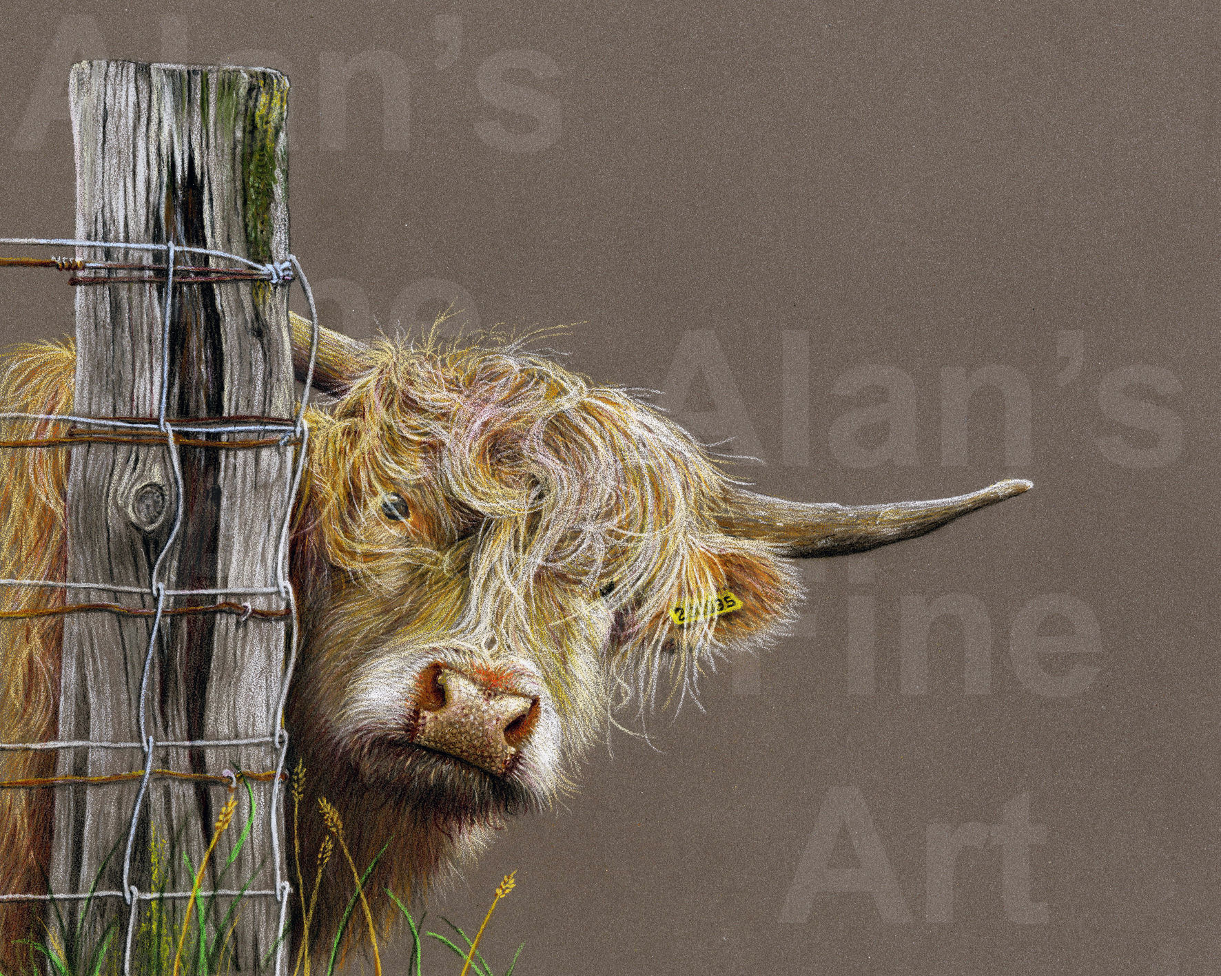 300 Highland Cow Annscan062 150x120 55b 30c 15red 10yellow cropped with watermark
